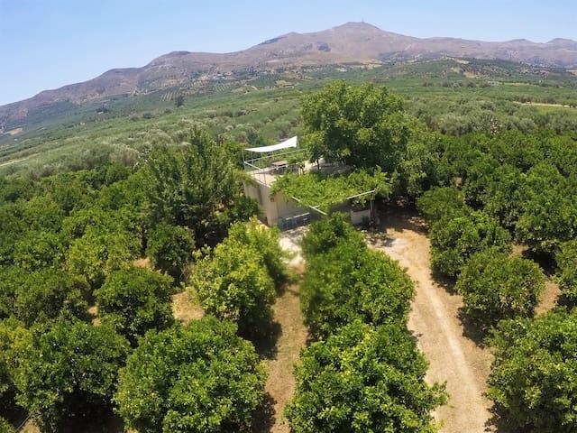 Farm House in Bio Οrange Plantation
