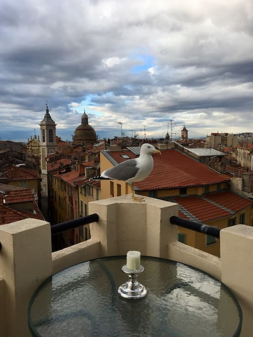 A friendly seagull atop my big circular terrace overlooking the rooftops of Old Nice!