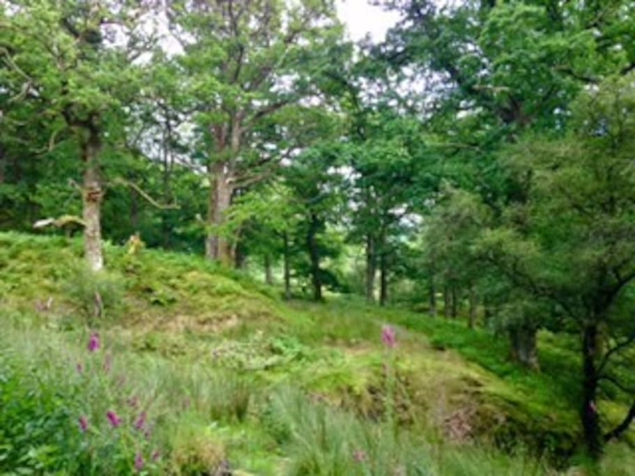 Spean Crescent is close to a range of easy forest walks.