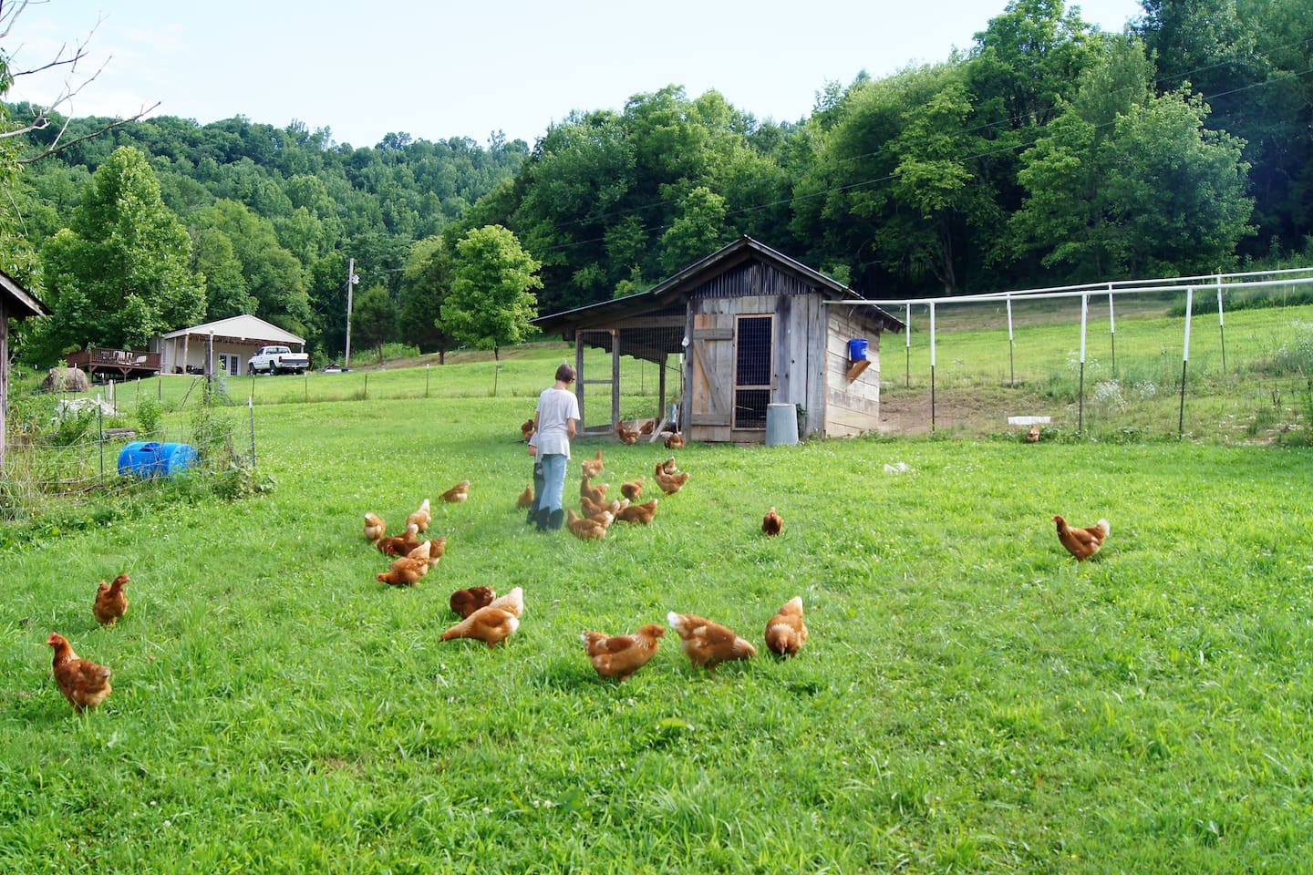 Building nestled in the background is the building. Picture taken from our home. Chickens provide fresh eggs if wanted.