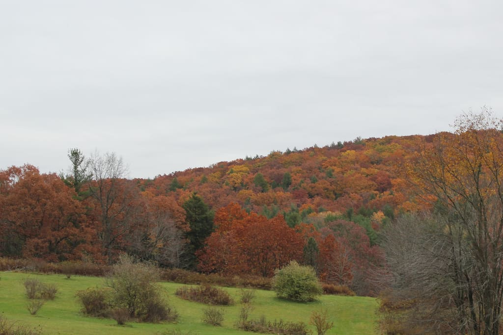 Another view of the back yard in fall