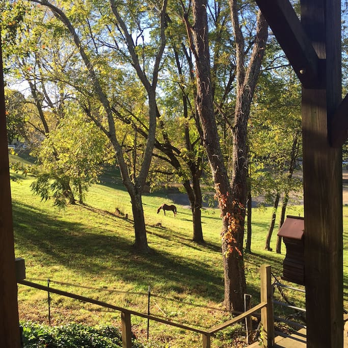 Pasture view from covered deck