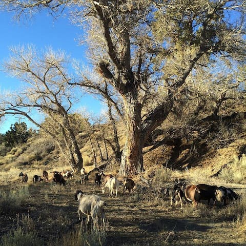 Guests are invited to join us on goat hikes. See the Angeles Crest Creamery facebook page for event details.