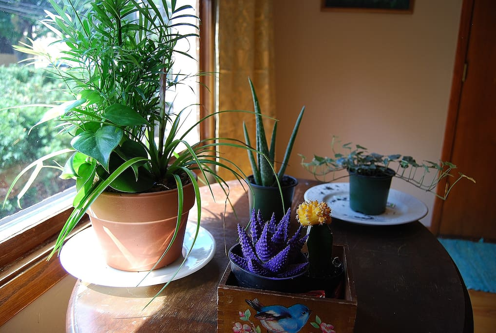 Plants in the Common Room