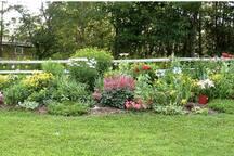 My perennial garden in peak summer.