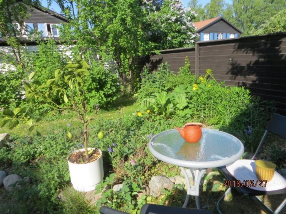 Garden, May.