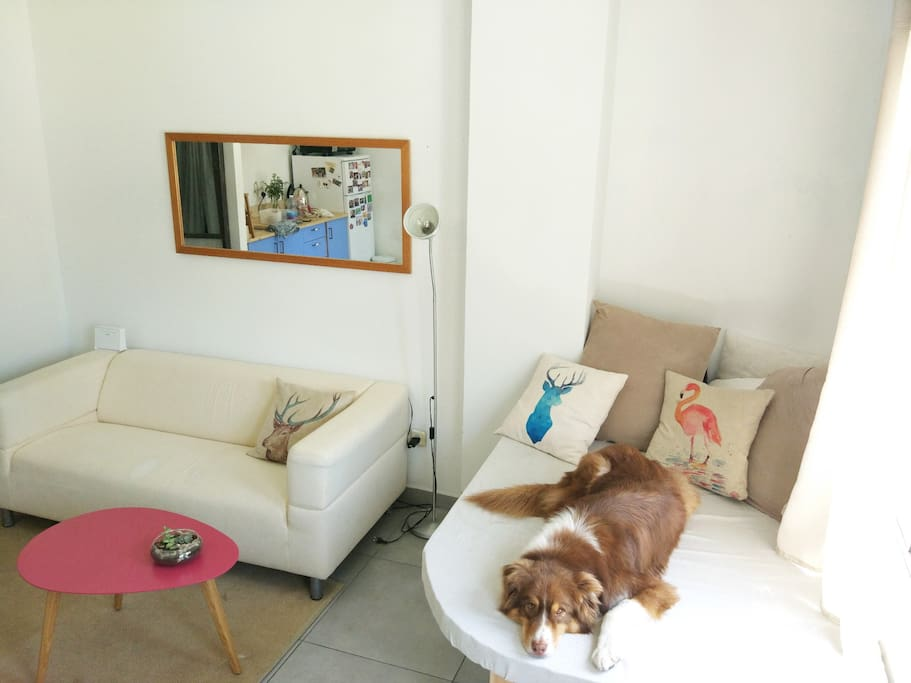 The living room, with comfortable sofa and an upholstered seating area by the window. Dog not included :)