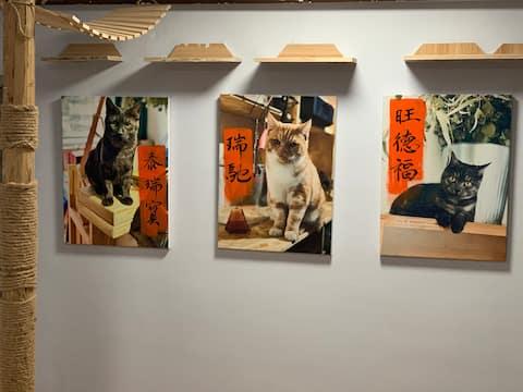 每客彻底消毒如常民宿SAME出品-猫咪客栈,撸猫圣地,活力城,火车站,重庆路商圈,人民广场地铁站