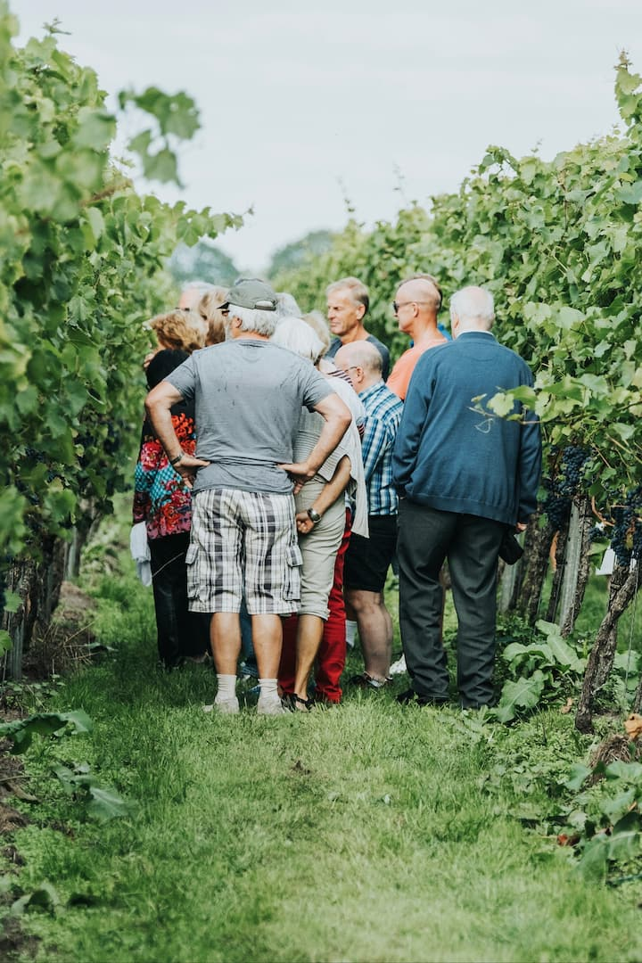 A guided tour through the Vineyard.