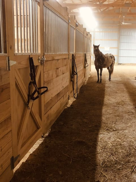 Horse barn bunk room
