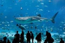 Georgia Aquarium - 5mins Away (Train Accessible)