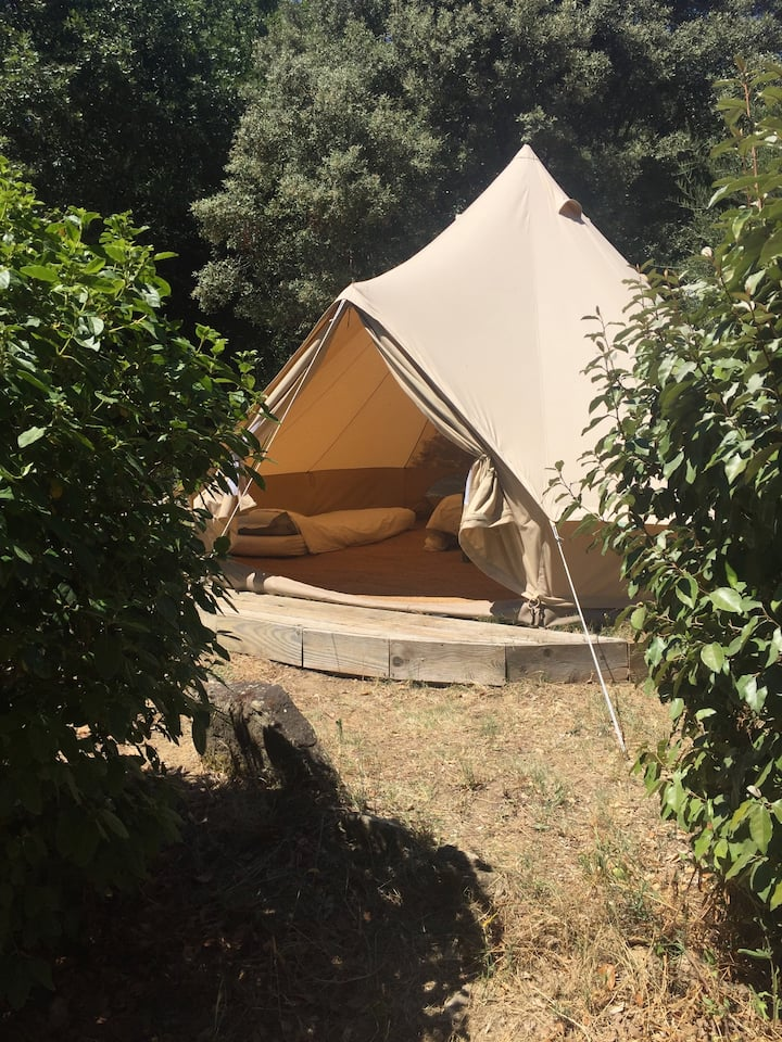 Beautiful Bell tent in the forest