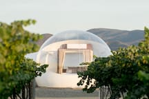 Bubble Life and vineyards