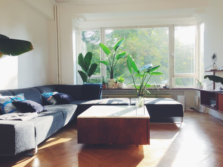 Bright living room overlooking the park