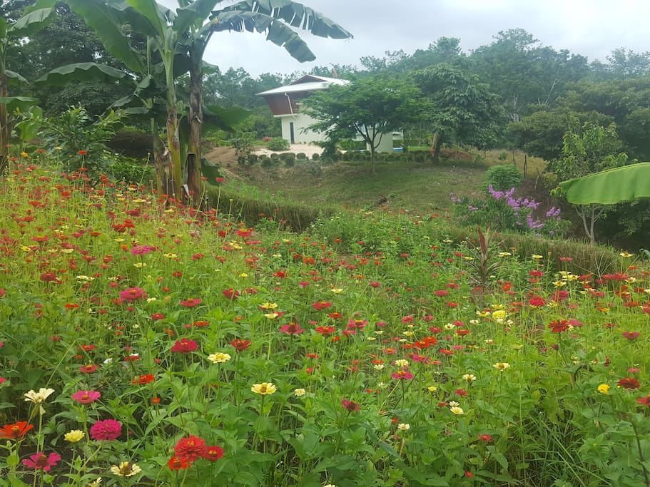 Brand new house . 2000 square meters / 4 independent bedrooms with it own bathroom . Swimming pool in a lush natural environment. 100% secure .