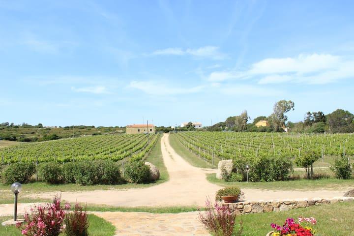 Agriturismo Campesi, Bilocale tra le vigne.