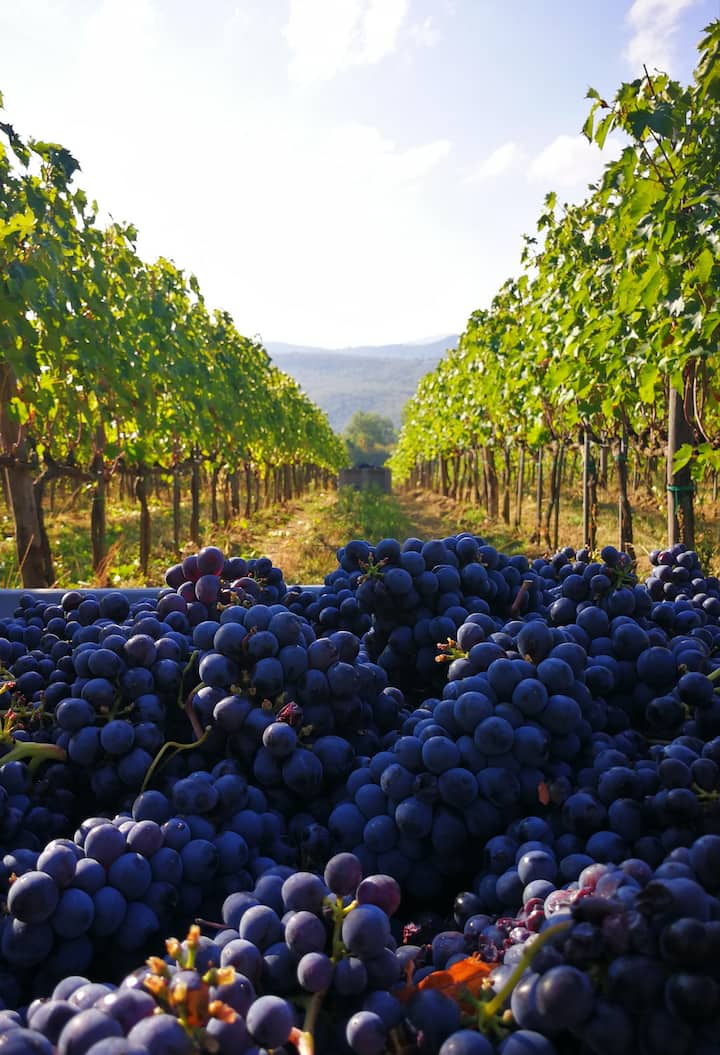 From the vineyard...