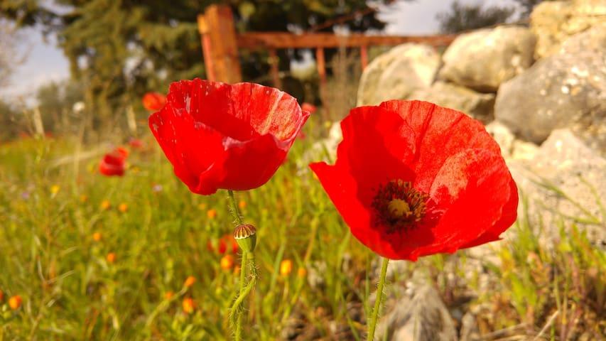 Benessere, Nordic Walking & Food in Puglia - Cassano delle Murge - บ้าน