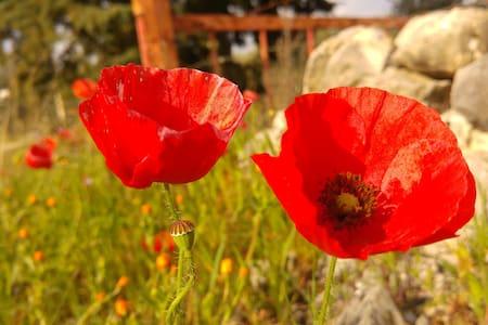 Benessere, Nordic Walking & Food in Puglia - Cassano delle Murge - Talo