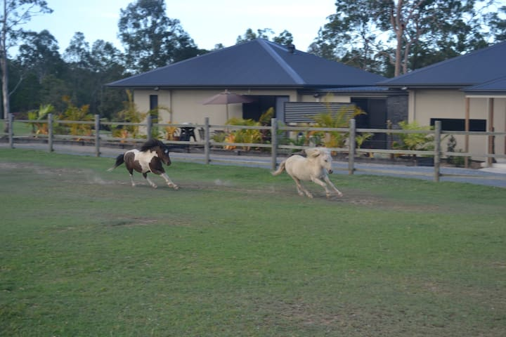 Farm stay close to theme parks - Maudsland