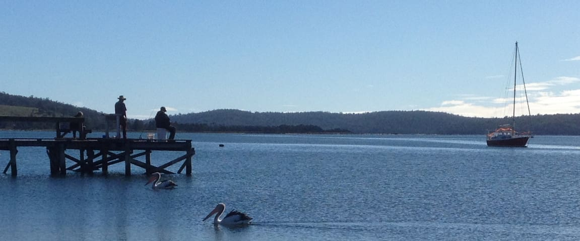 Local pelicans, can find them scattered along Georges Bay beaches.