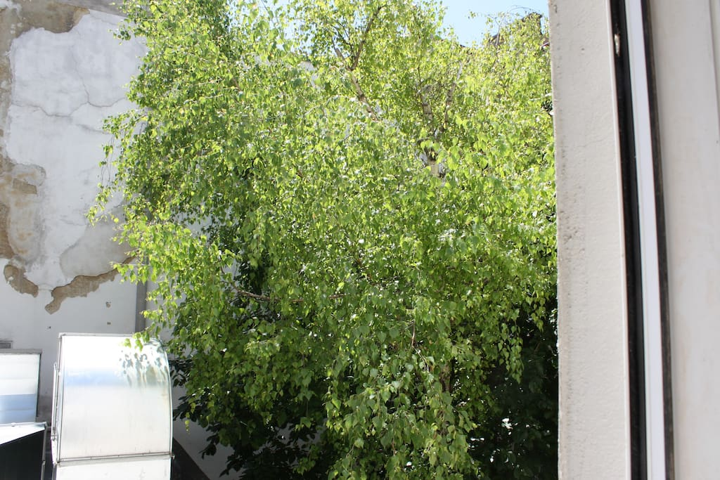 A lucky tree is a home to birds. A lucky me is the birds´ dirt fall in the other yard.