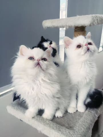 little cats born in this house