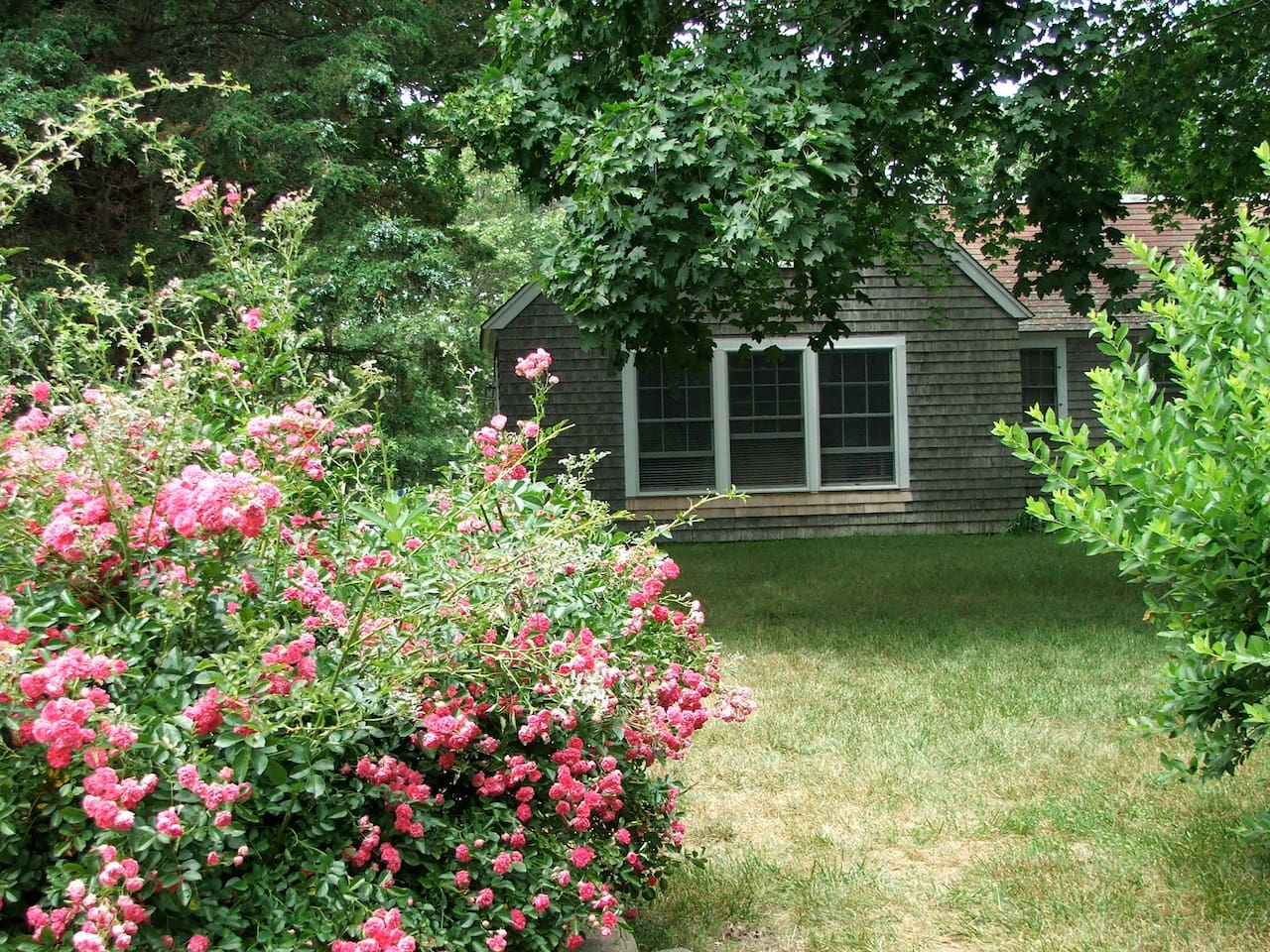 Front view in July when roses bloom