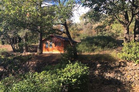 Cabane au cœur de la garrigue - Ollioules - Hut