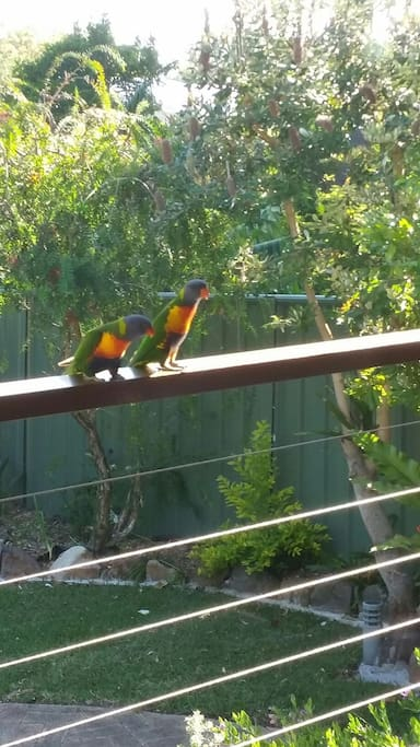 Birds can be fed from the rear balcony. Lorikeets will often eat from your hands, our Kookaburra (The General) often pops in for a feed and a visit as well.