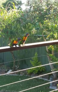 Relaxed, Native Garden, Lorikeets - Nelson Bay - Hus