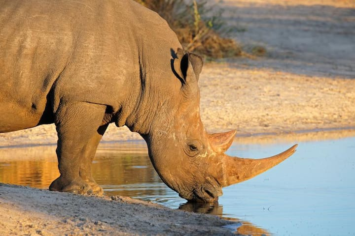 Lodge 14 Black Rhino Reserve Pilansberg S. Africa - Bojanala - Natuur/eco-lodge