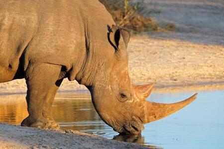 Lodge 14 Black Rhino Reserve Pilansberg S. Africa - Bojanala - Naturhytte