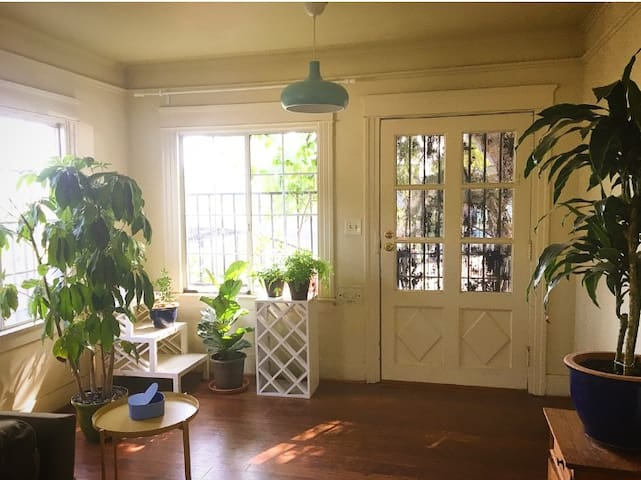 Plants and Sunlight in a Charming 1920's Home