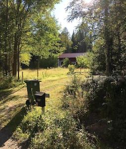 Skogstorp i Dan Anderssons trakter