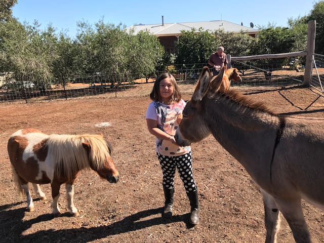 Tyrone minature horse and EeOre the donkey