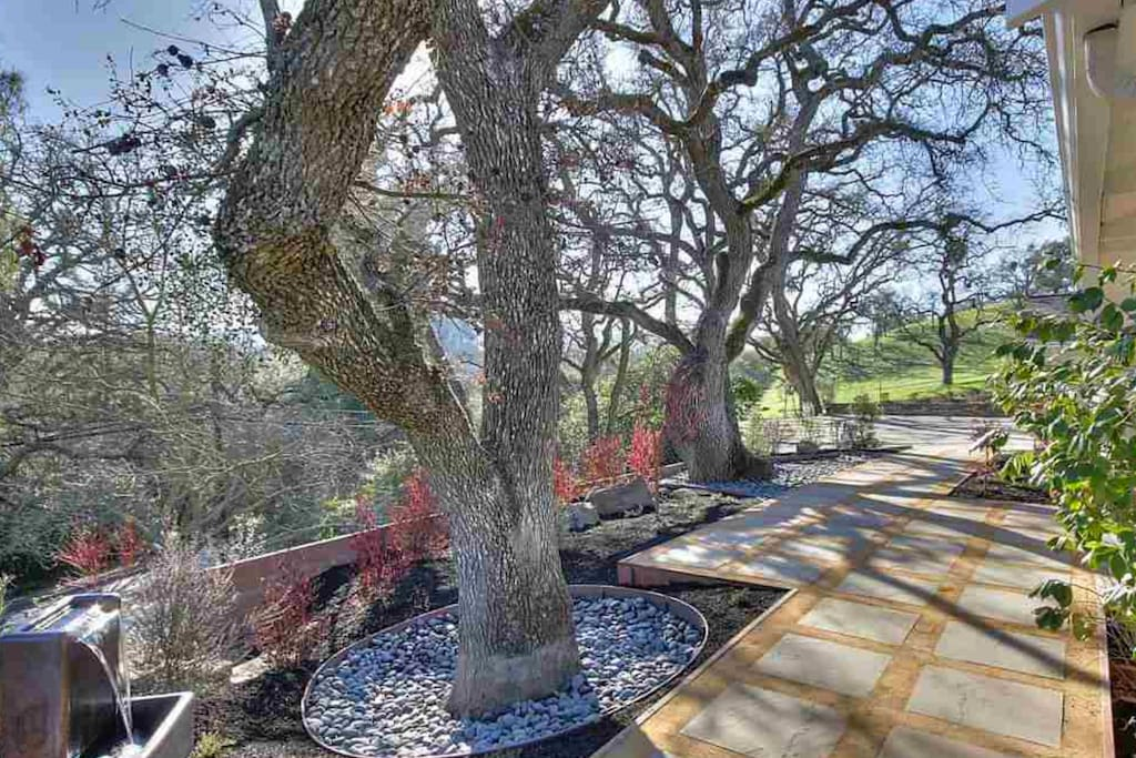 Beautiful oak trees adorn the property.