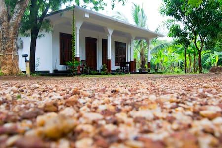 sigiriya flower guest - Sigiriya