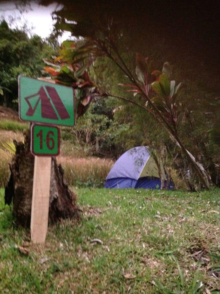 El Bosque Lodge Agroecoturismo CAMPING