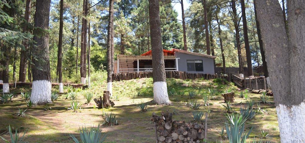 Cabaña en el corazón del bosque de La Marquesa