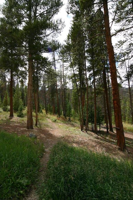 Trail to Peak 9 skiing / biking, Burro Trail snow shoe / hiking, or to Stream