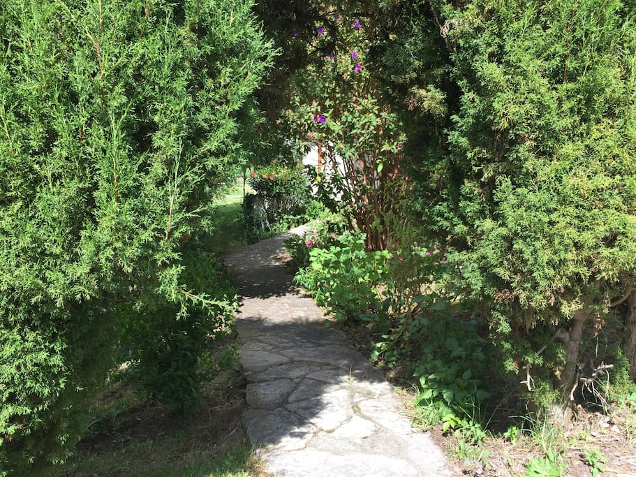 Main walking entrance surrounded by pine trees