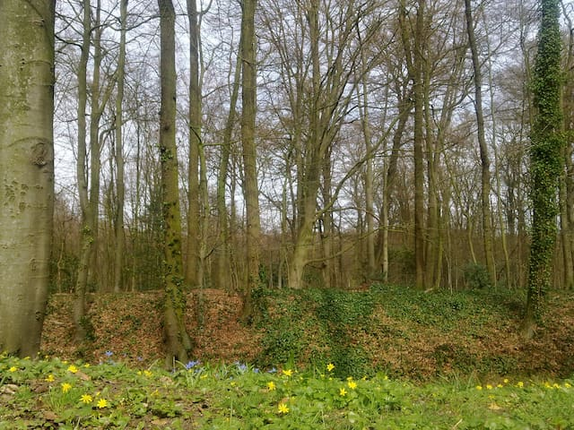 "B&B ""Bed in het Bos"" - Arnhem - Dům"