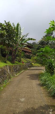 This is the private road leading into the compound of Villa Hakim.