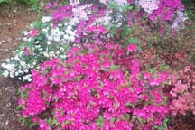 Flowers in bloom April-Oct