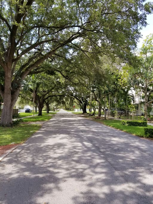 Just outside our door. This is the beautiful tree lined street that the property sits on.