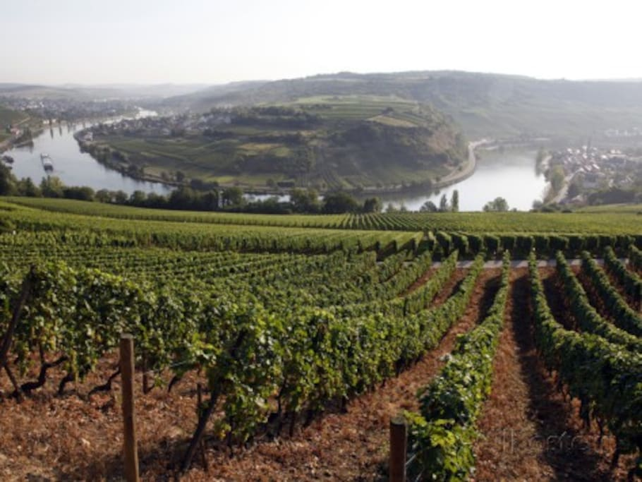 Vineyards and Mosel river near Grevenmacher