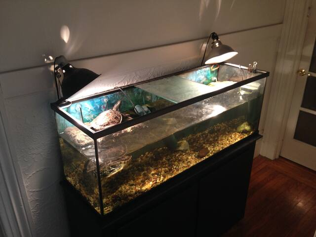 Turtle tank in common hall area