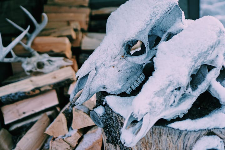 Nothing says Montana like firewood and skulls.