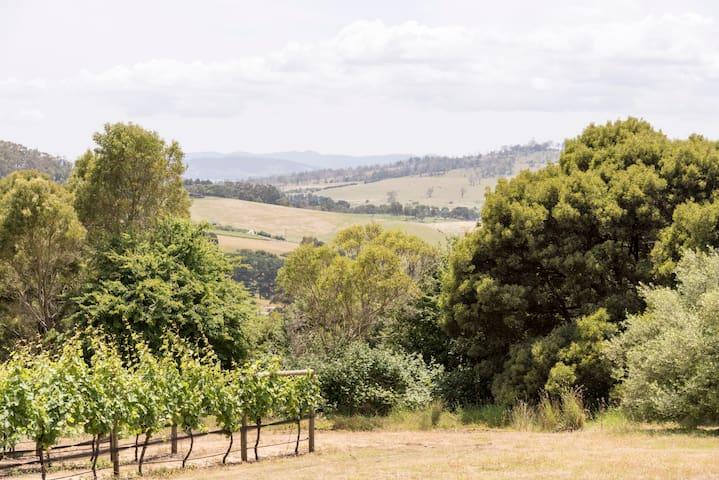 Walk in the Vineyards